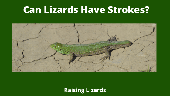 Can Lizards Have Strokes_