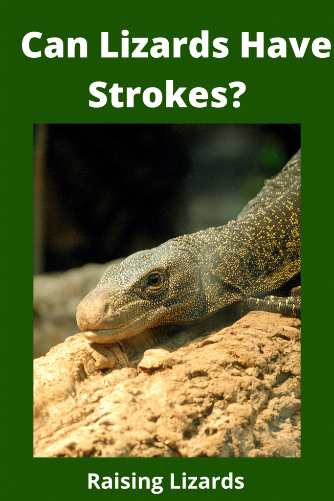 Can Lizards Have Strokes