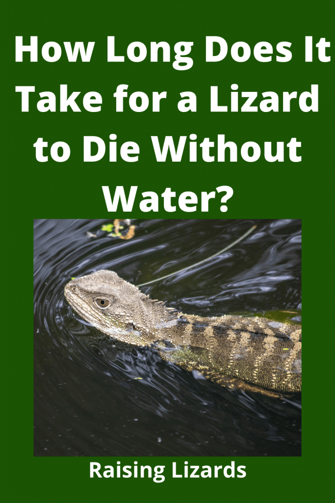 How Long Does It Take for a Lizard to Die Without Water