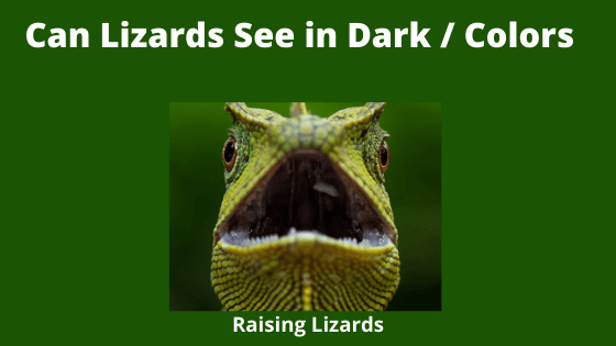 Can Lizards See in Dark _ Colors
