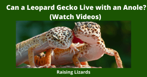Can a Leopard Gecko Live with an Anole_ (Watch Videos)