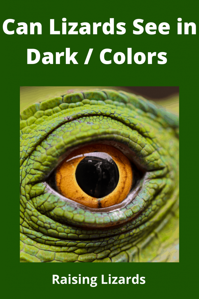 Can Lizards See in Dark