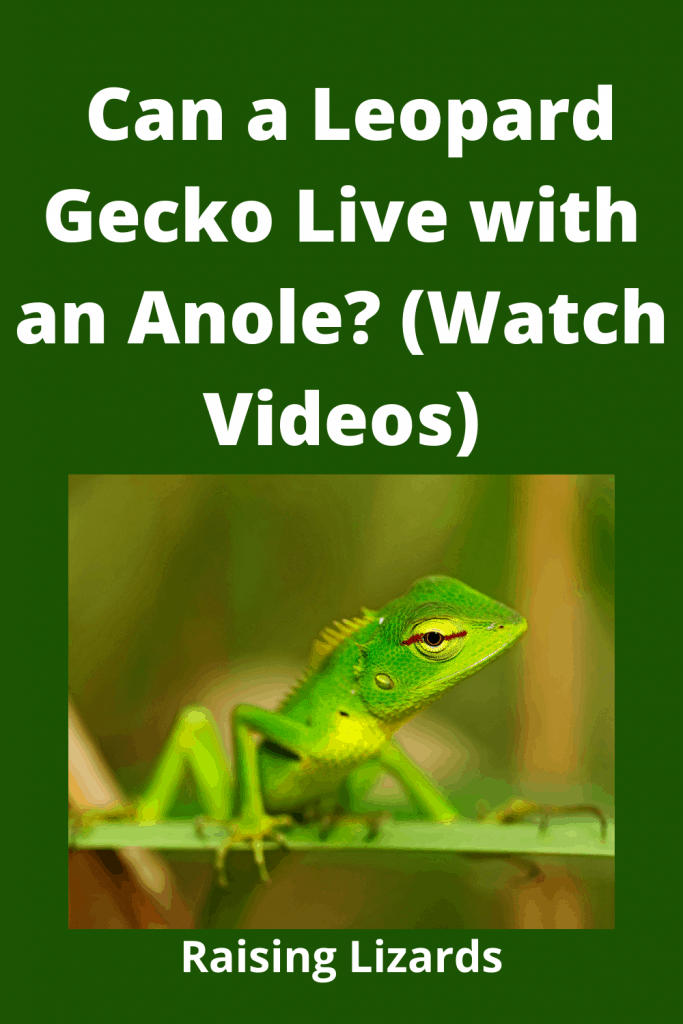 Leopard Gecko Live with an Anole?