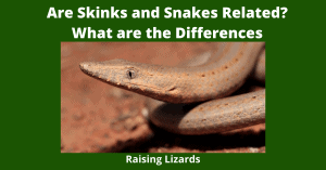 Are Skinks and Snakes Related? What are the Differences