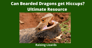 Why Does My Bearded Dragons Get Hiccups?