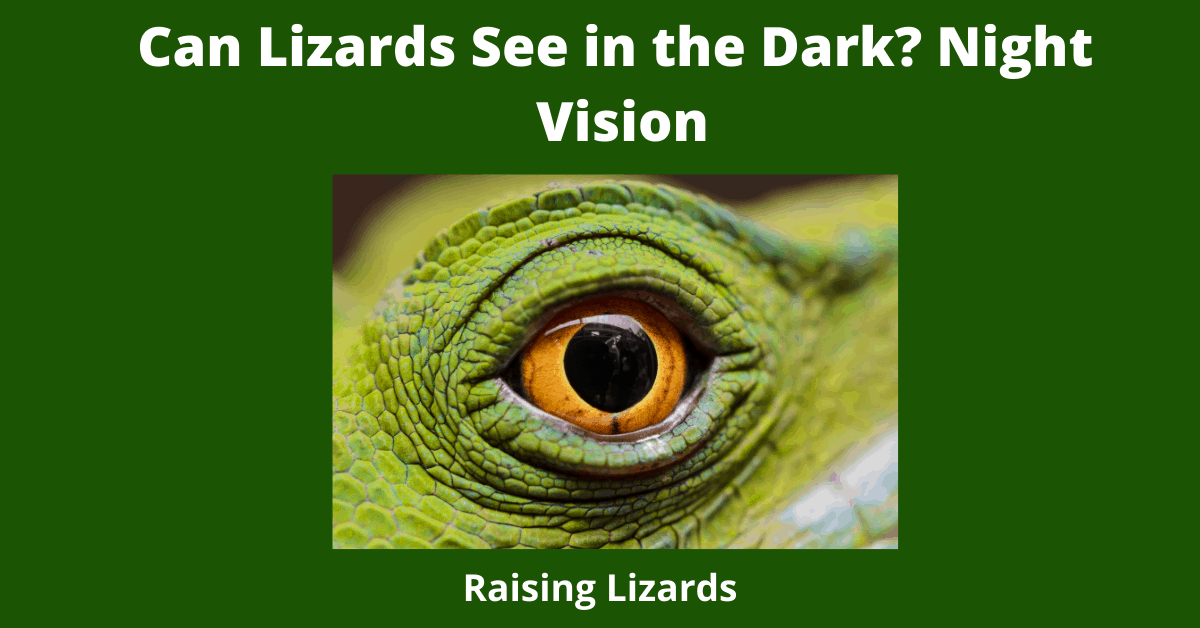 Can Lizards See in the Dark? Night Vision