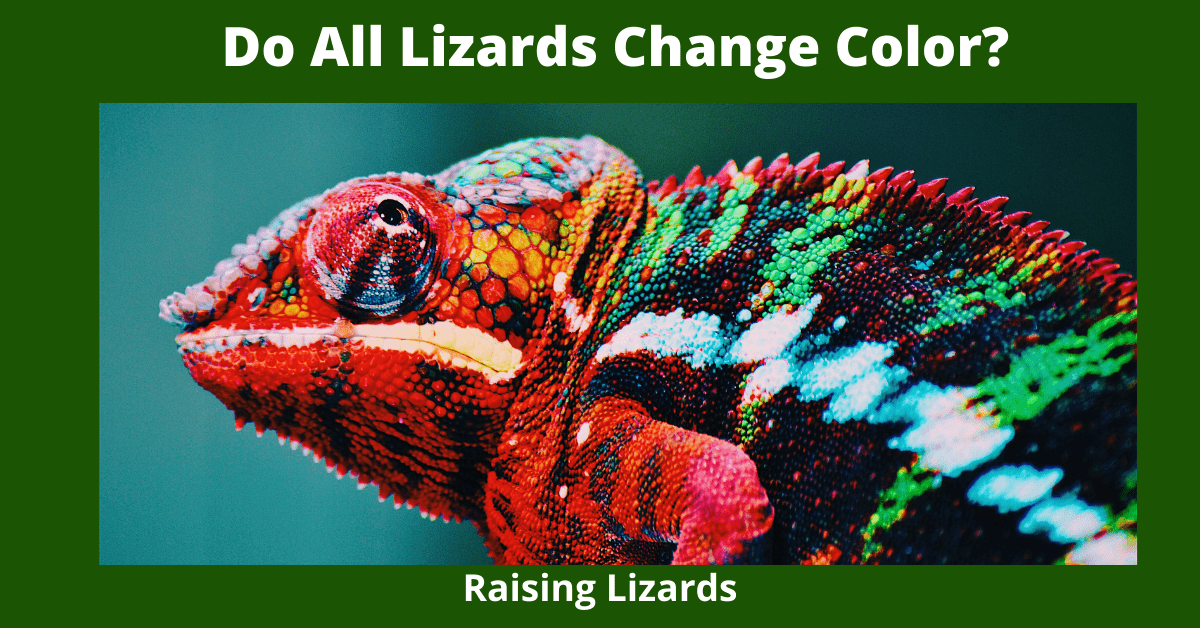 Do All Lizards Change Color_