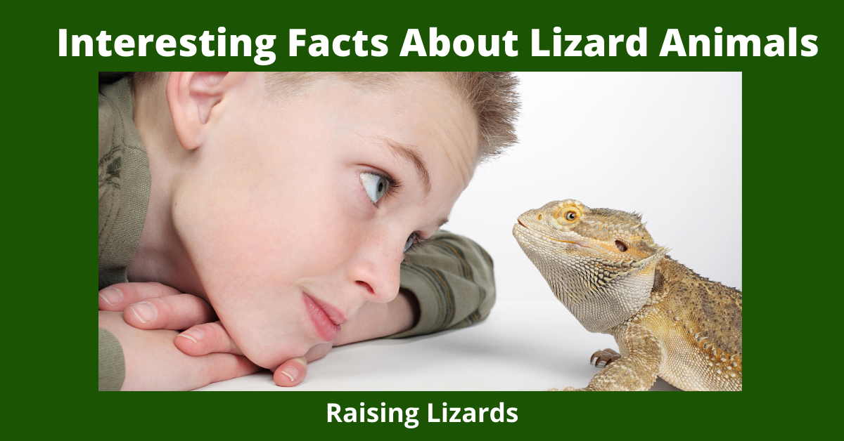 Interesting Facts About Lizard Animals